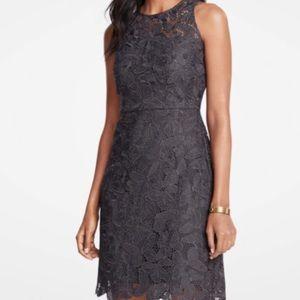 NWT Ann Taylor lace gray shift dress 👗 size 8
